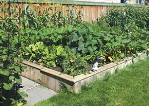 The Lakeside Leader summer garden series