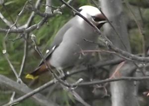 Banding season is over, but winter birding is just beginning!