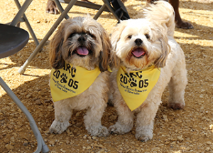 Good participation, good result in annual ARC Dog Walk fundraiser