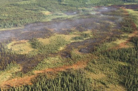Wildfire danger sitting at moderate for theSlave Lake Area