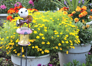 Leader Summer Garden Features