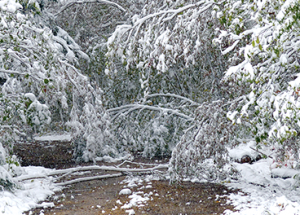 Wintry weather: the usual cautions apply