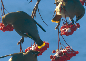 Christmas Bird Count on Dec. 16 this year