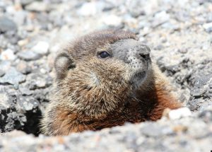 Groundhogs agree winter is over