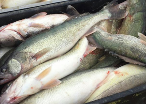 33 people charged in fish trafficking
