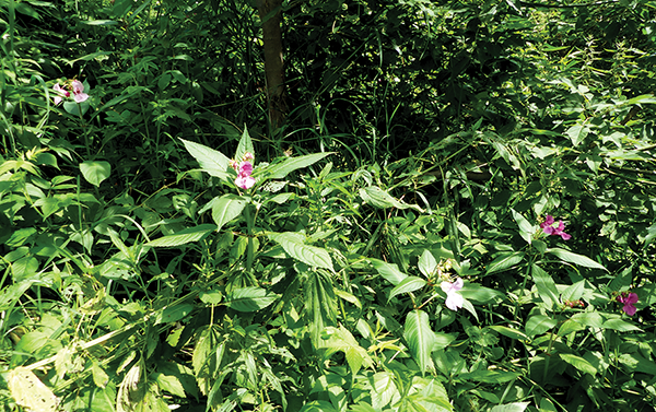 What is a noxious weed, and why care about it?