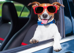 Leaving pets in hot cars can be deadly